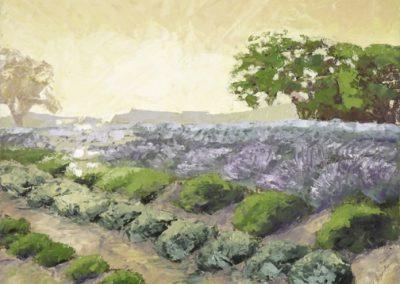 Ojai Lavender Field